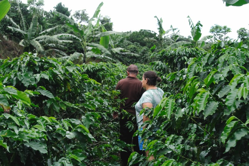 Reviving Costa Rica's Coffee Traditions